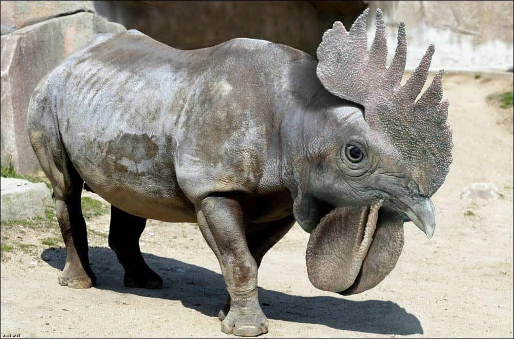 animaux hybrides