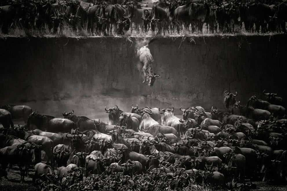 Nat-Geo photo contest 2014