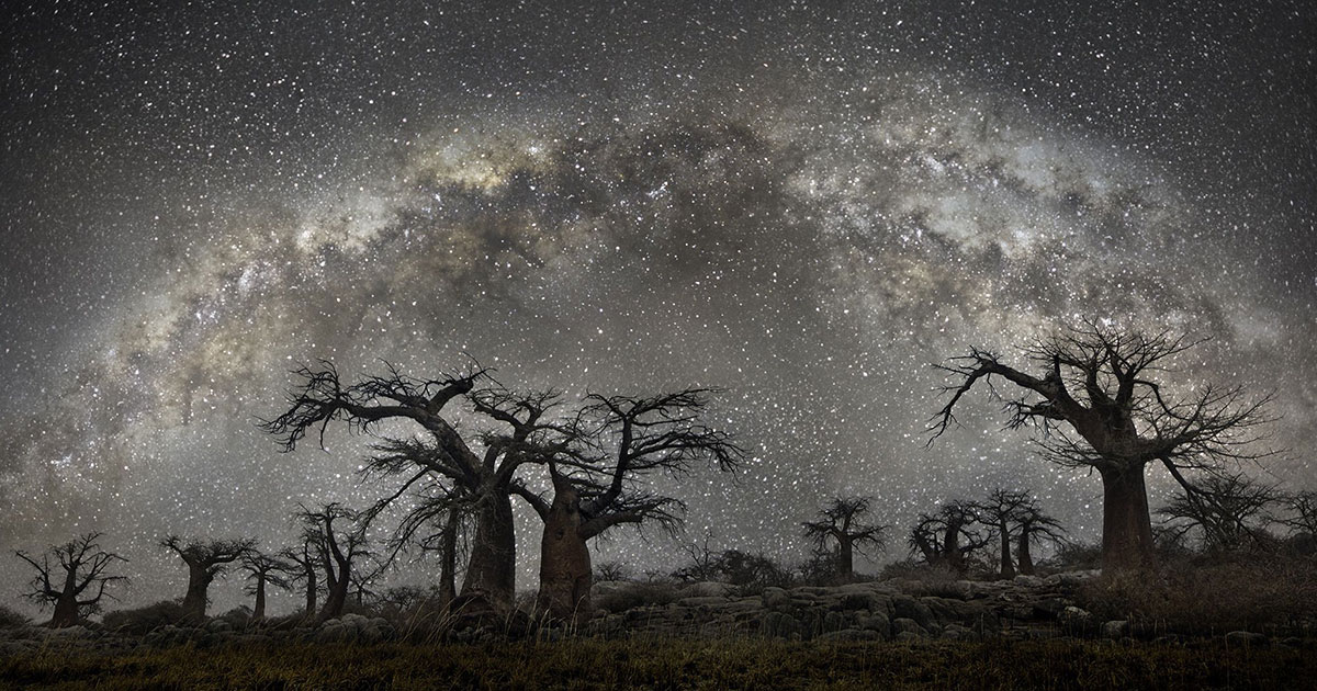 The magnificent trees of Beth Moon
