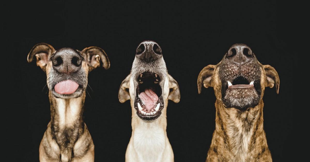 Portraits bien sympathiques de chiens adoptés – de Elke Vogelsang